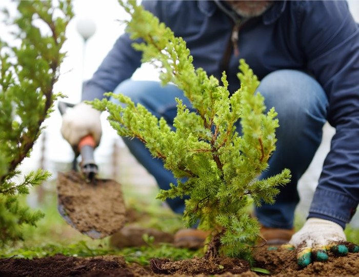 Common purchasing mistakes landscaping companies make